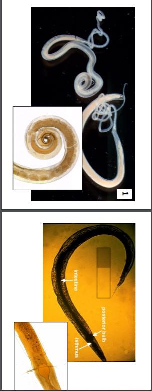 Parasitology identification