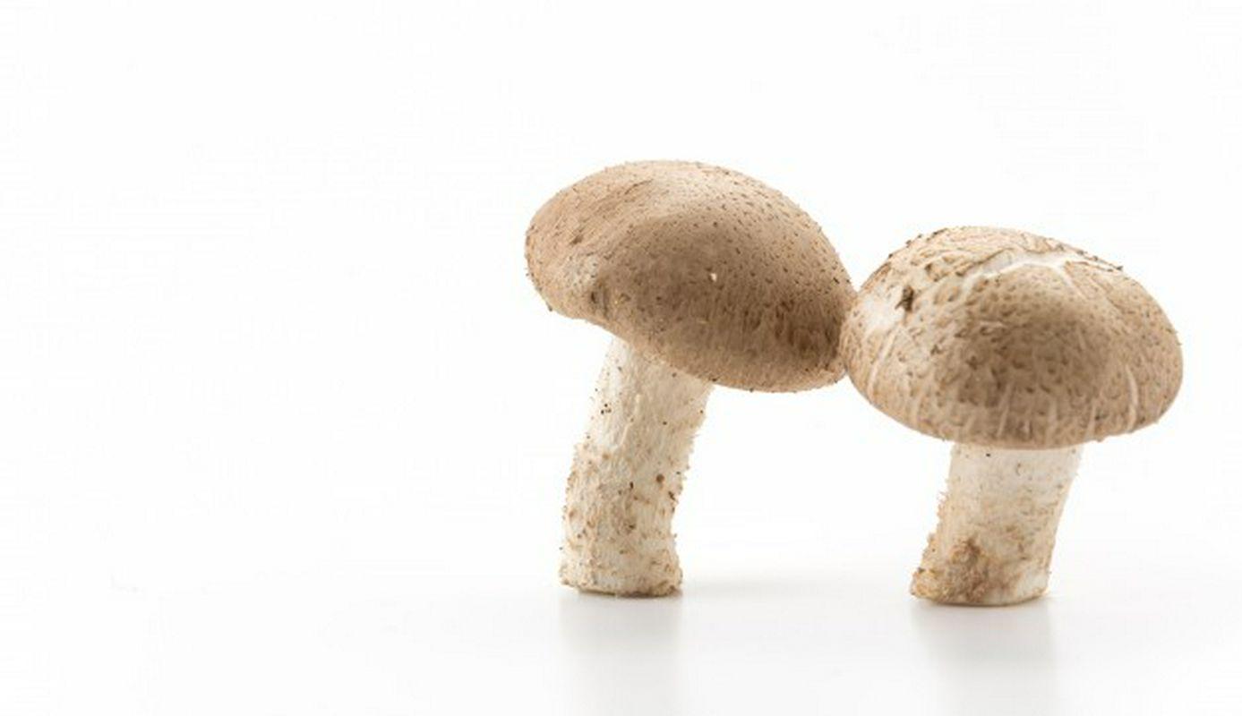 o cogumelo