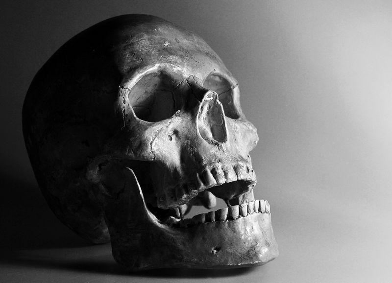 Skull Sutures