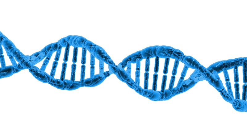 Science - DNA, Natural selection and preservation