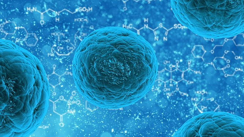 Science - Cells, Nutrition and Digestion