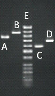 Bio 102 Quiz #6 Review