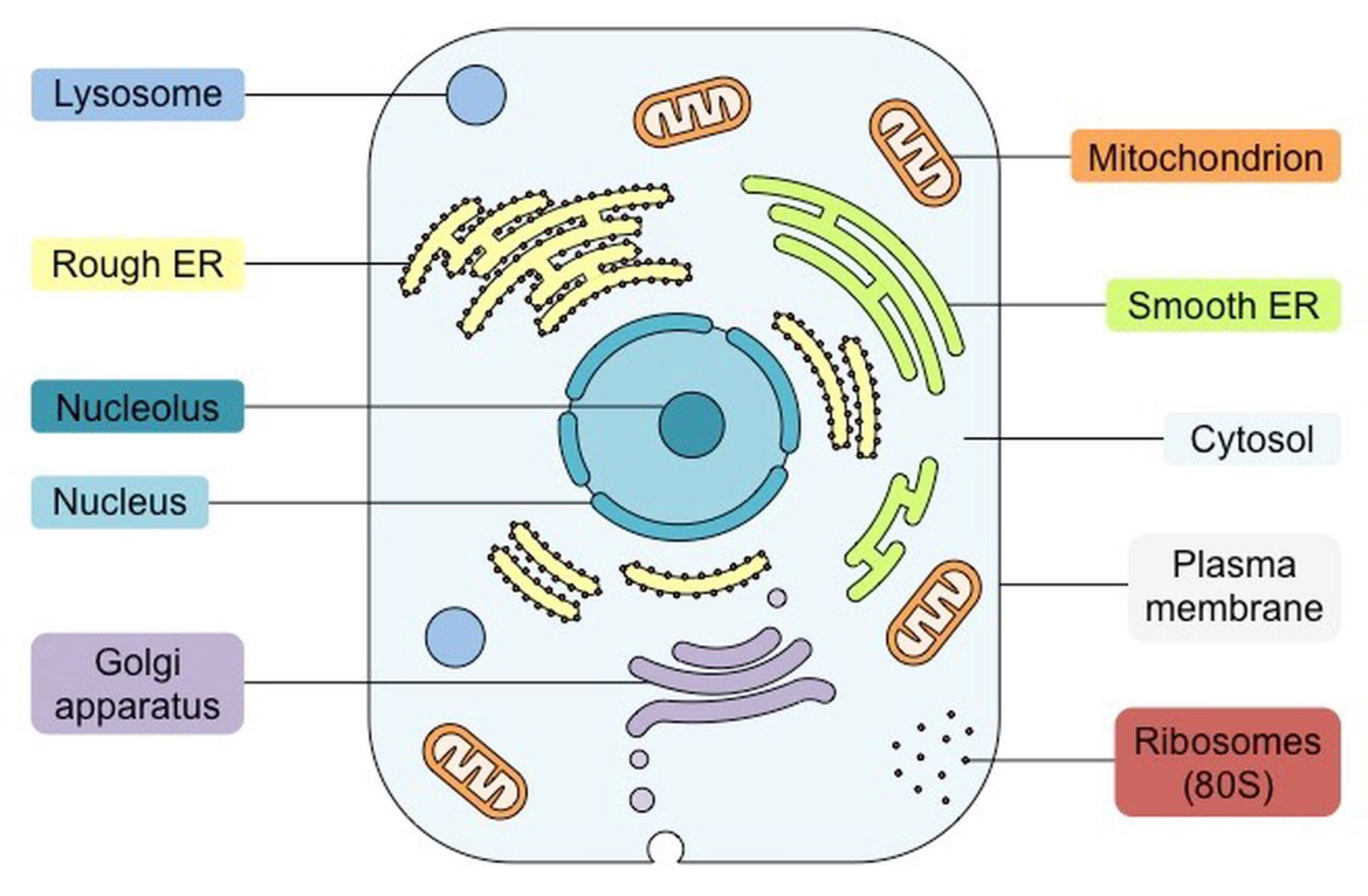 BIOLOGY TOPIC 1 CELL BIOLOGY