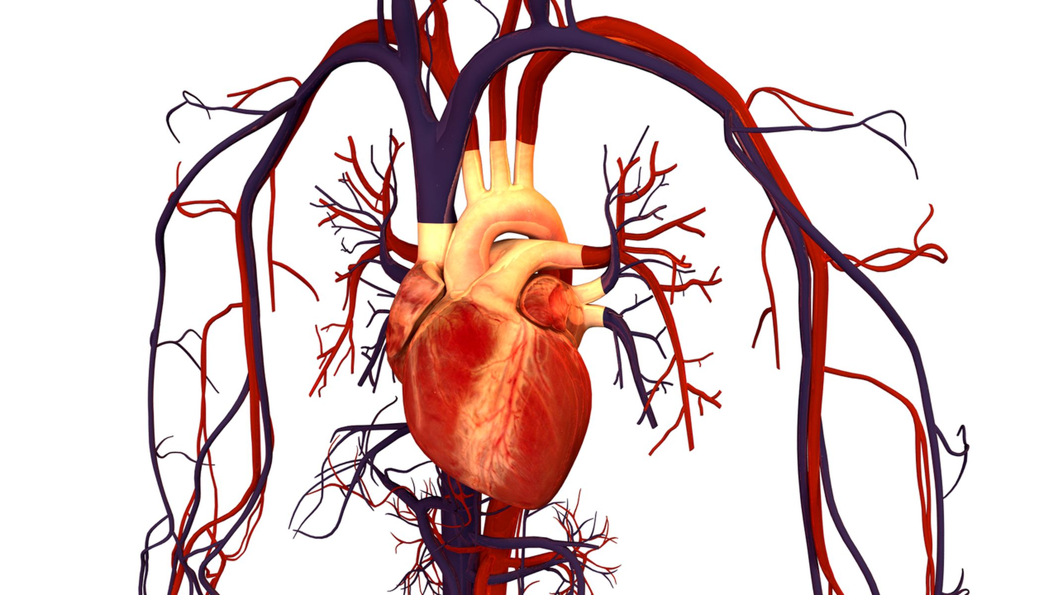 Cardiovascular  and Peripheral Vascular Disorders
