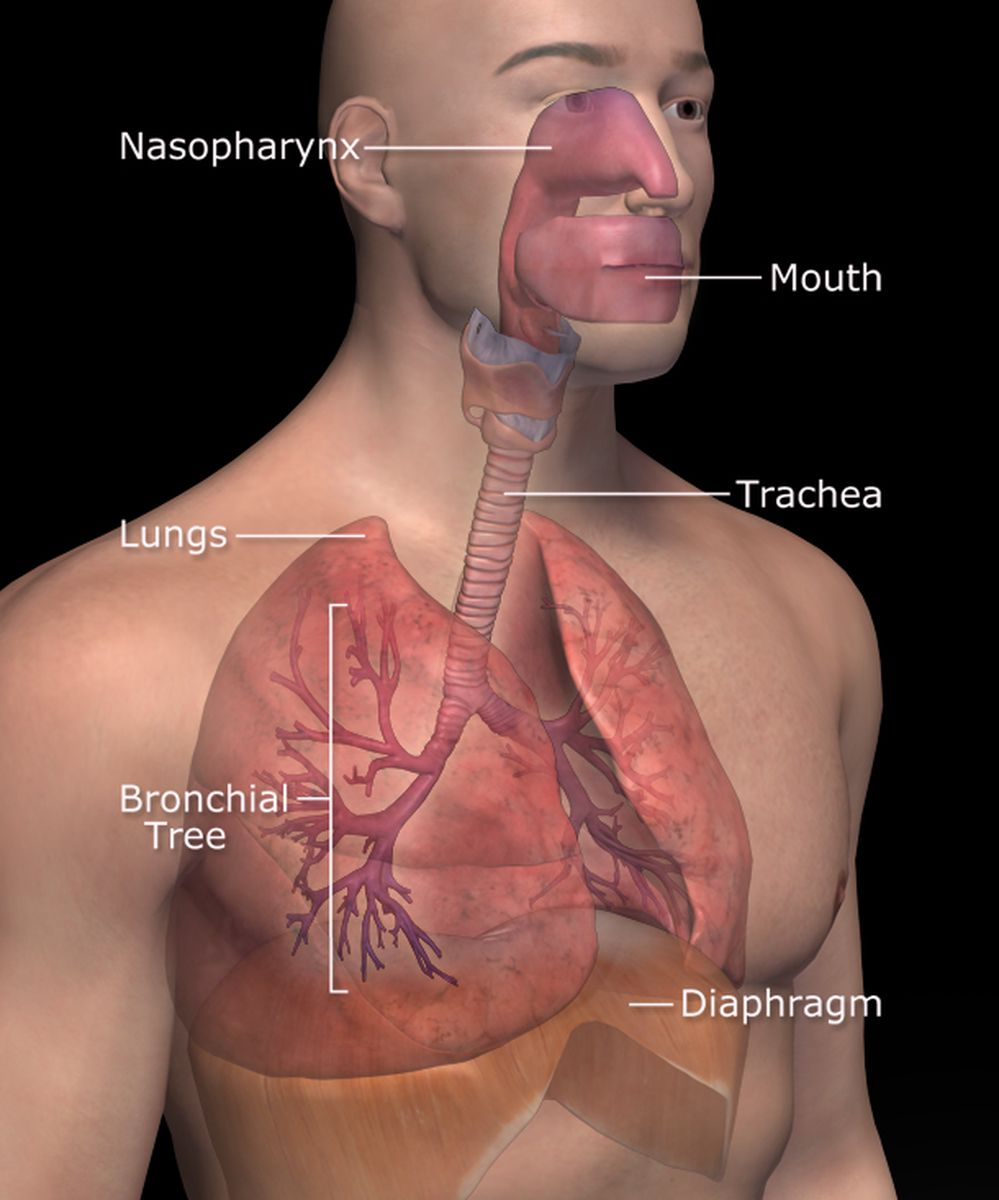 Respiratory System and Disorders