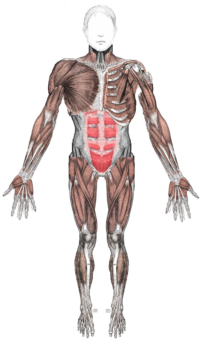 Integumentary and Musculoskeletal Disorders
