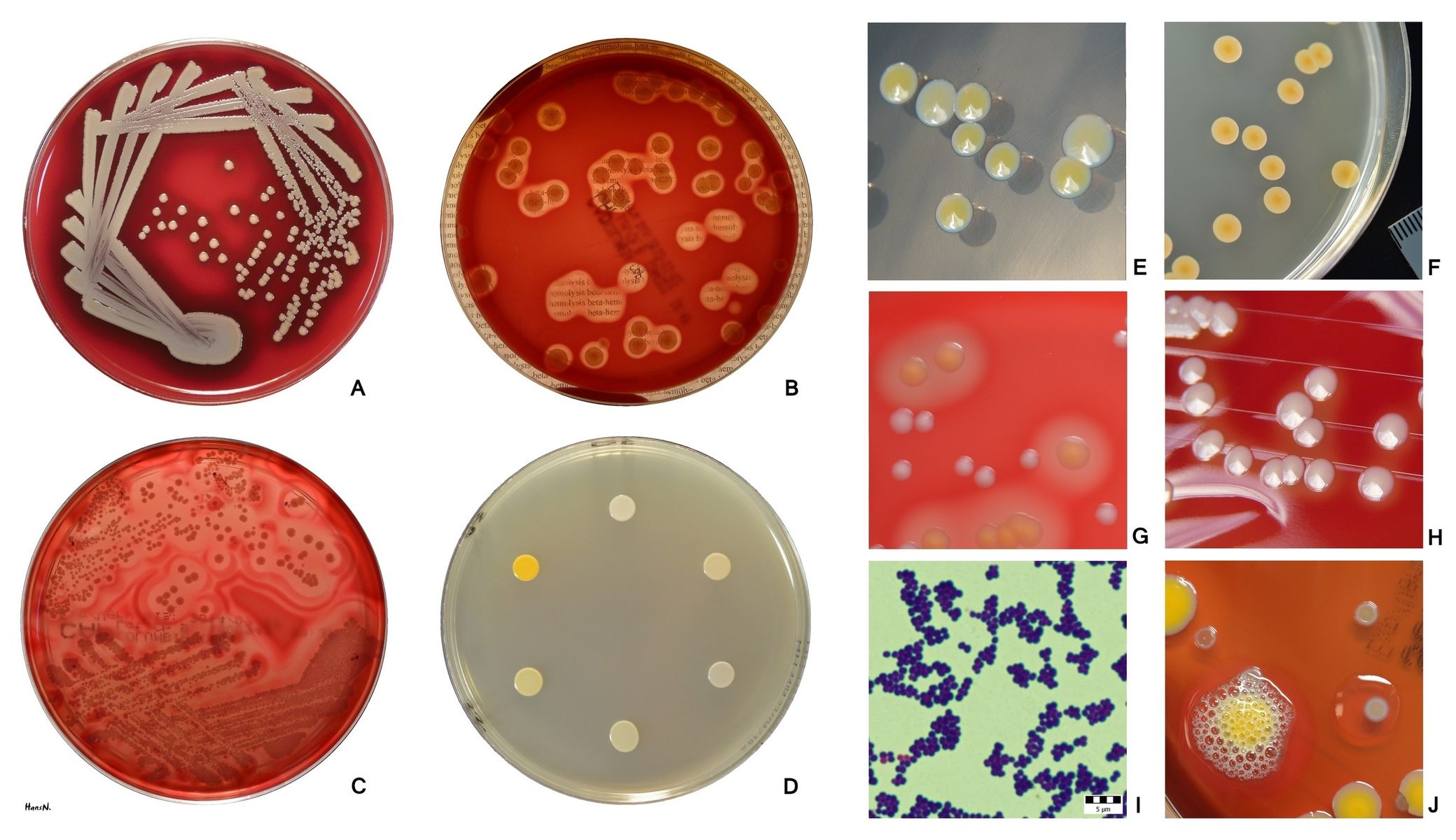 Microbiology with Tammy at Bel-Rea
